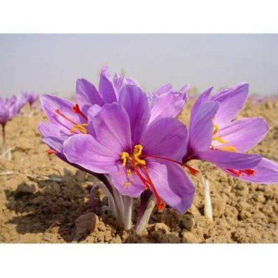 Nhụy hoa nghệ tây Iran