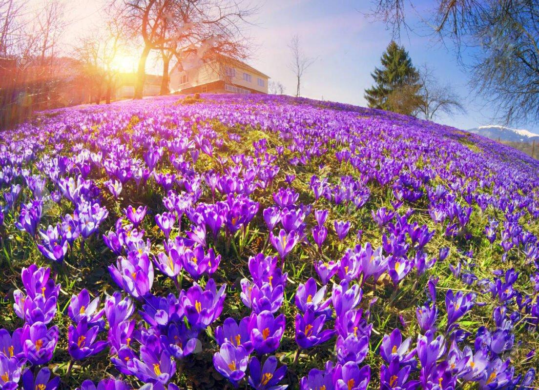 Sức sống của những bông hoa trong những tia nắng mới